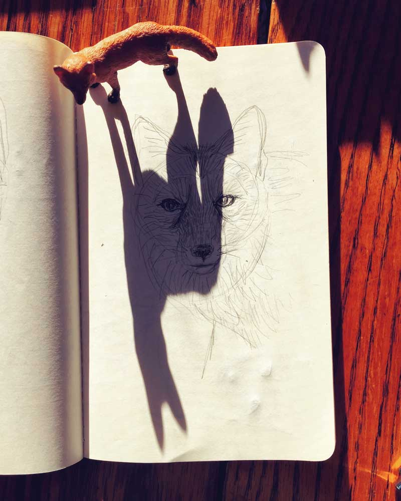 Three Tricksters: Fox, Coyote, Shadow, photo by Stephanie Thomas Berry